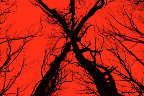 #SDCC16: The woods de Adam Wingard es en realidad BLAIR WITCH!